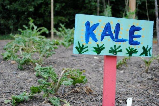 SOUL Kale 2010